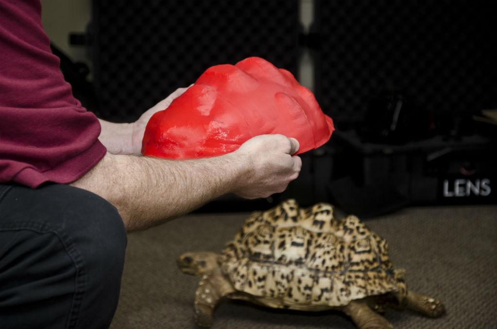 schildpad 3d printen