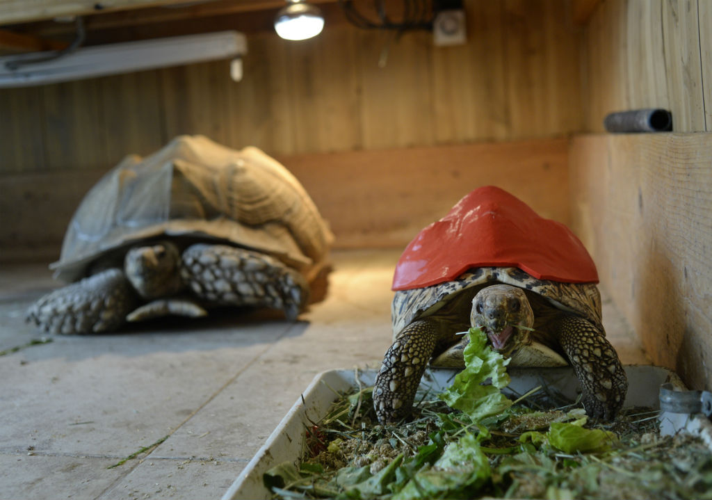 schildpad 3d geprint